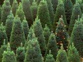 Какой Новый год без елки?!